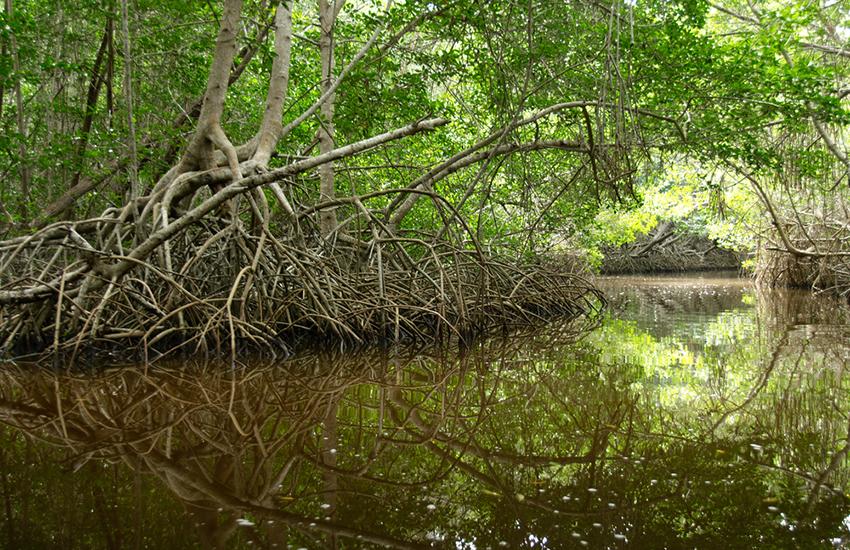 El Corchito Ecological Reserve, Mexico