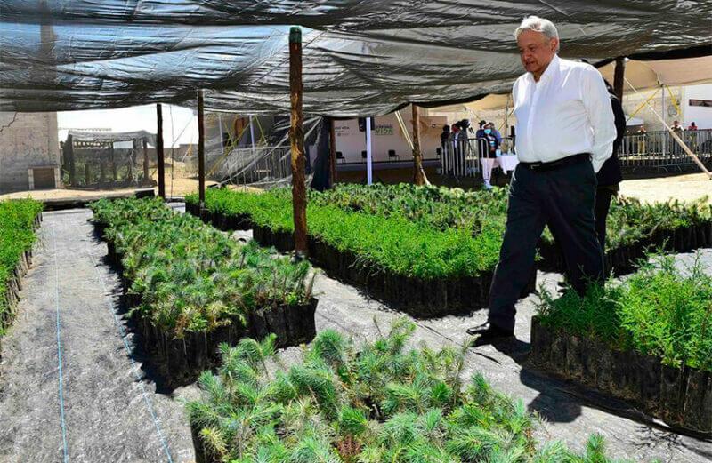 President López Obrador inspects a nursery